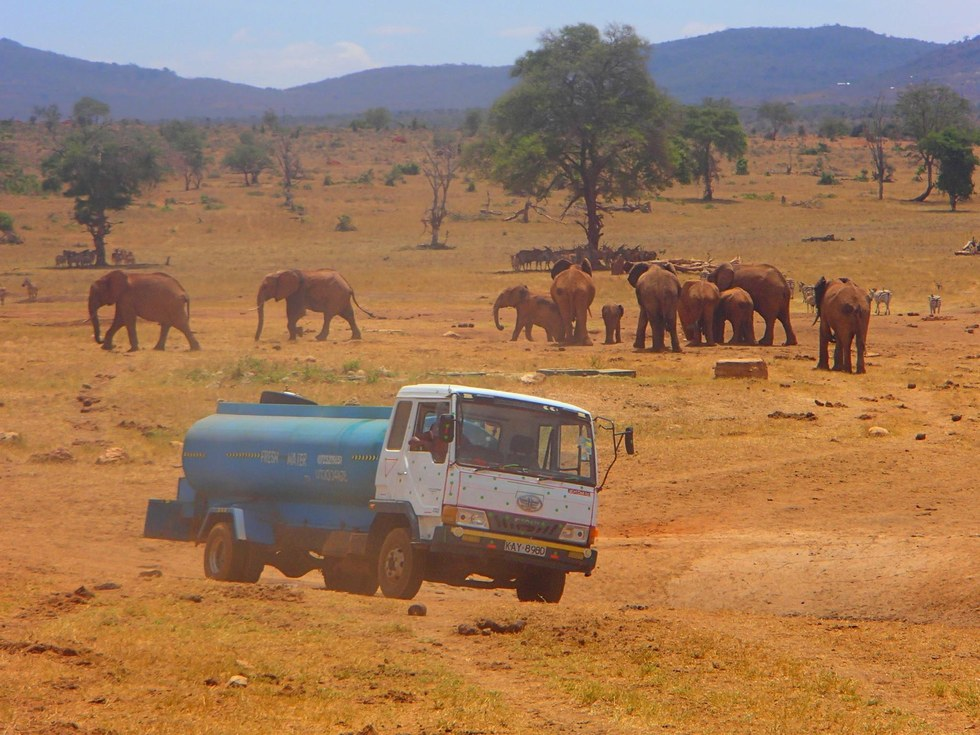 Човекот што секој ден им носи вода и живот на животните во Кенија