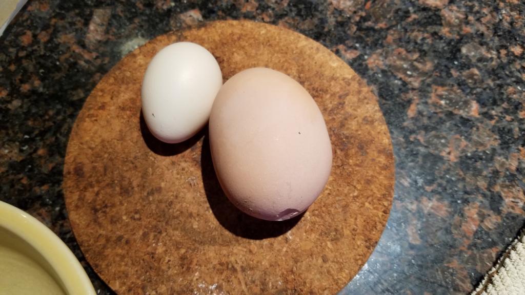 И тоа има  Кокошка снесе јајце во јајце
