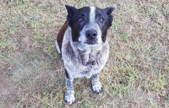 Старо  наглуво и полуслепо куче чувало девојче изгубено во дивина